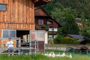 Sauschneiderhof - Wieland - Mariapfarr - Unsere Tiere